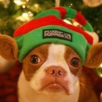 pet-holiday-postcards-2