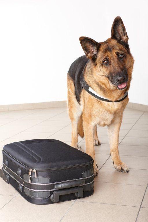 viajar-con-mascotas-comprar-billetes