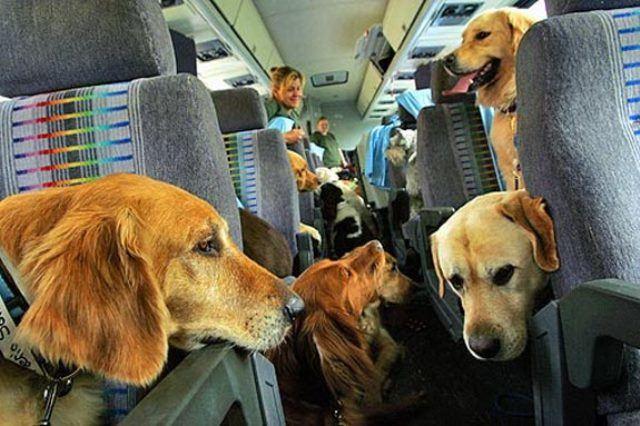 viajar-con-mascotas-perros-ayudantes