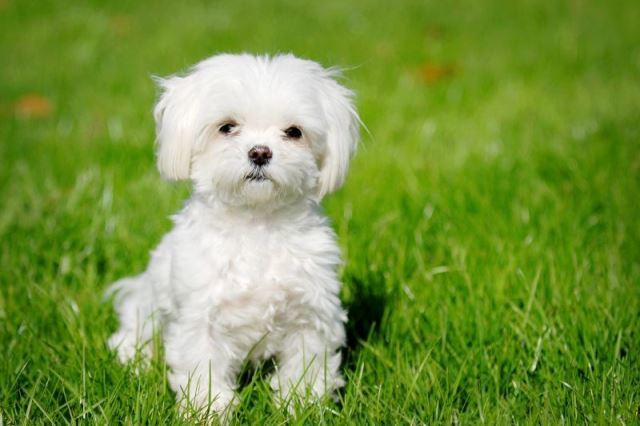 nombres-para-perros-diminutivos