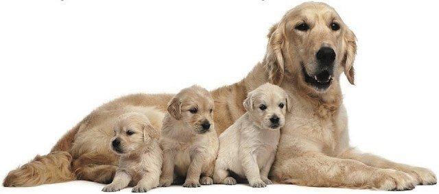 nombres-para-perros-grandes-y-pequeños