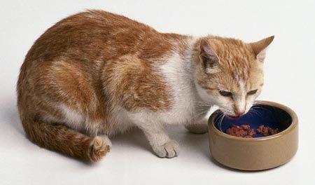 alimentar gatos