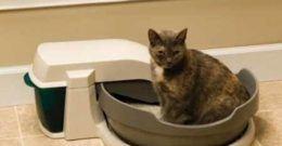 Cajas de Arena para Gatos