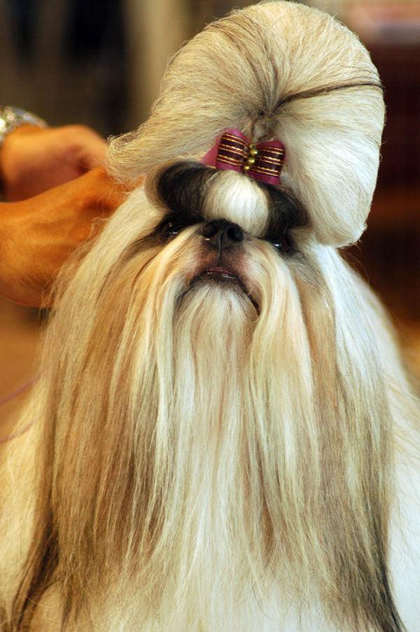 cepillos-para-perros-pelo-corto-tsitsu
