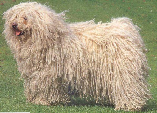 cepillos-para-perros-pelo-largo
