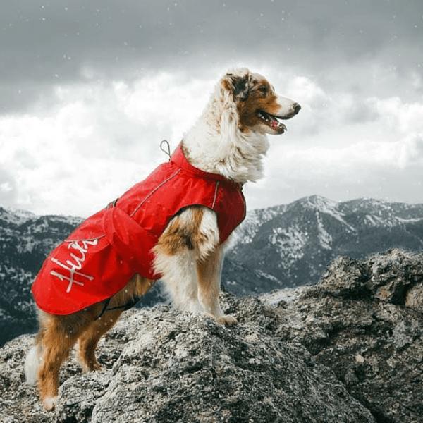 cuidados-de-mascotas-en-invierno-chubasquero-2