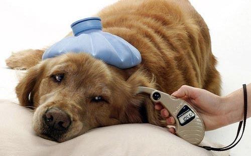 cuidados-de-mascotas-en-invierno-hipotermia
