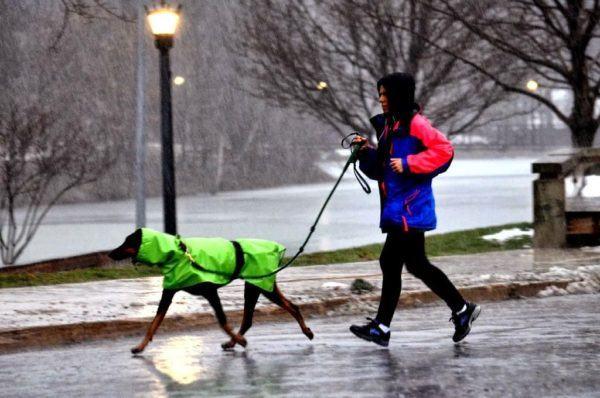 cuidados-de-mascotas-en-invierno-paseo