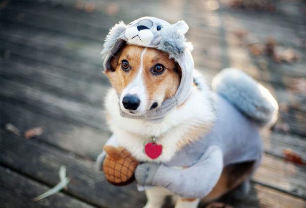 cuidados-de-mascotas-en-invierno-perro-abrigado