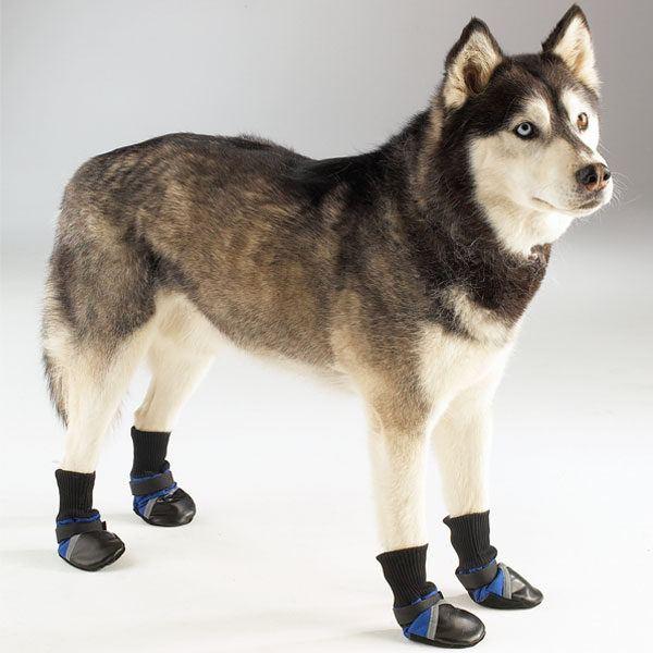 cuidados-de-mascotas-en-invierno-perro-botas