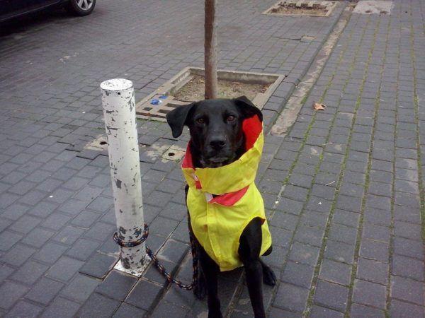 cuidados-de-mascotas-en-invierno-ukko