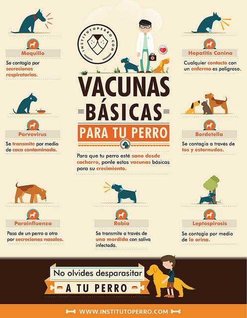 Resultado de imagen para vacunacion cachorros