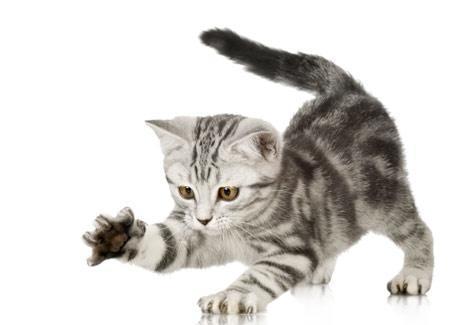cuidados gatos