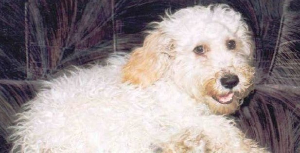gastritis en mascotas