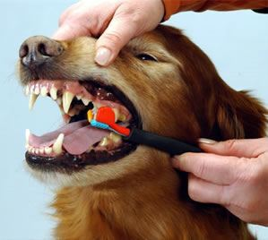 higiene bucal mascotas