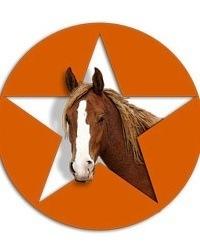 horse-portrait-funny