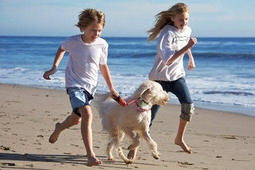mascotas y vacaciones