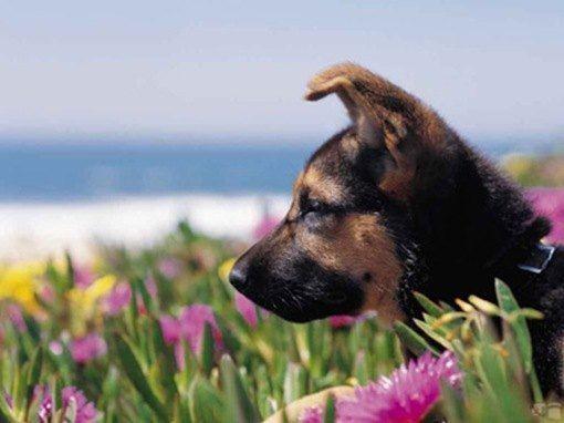 perros de vacaciones