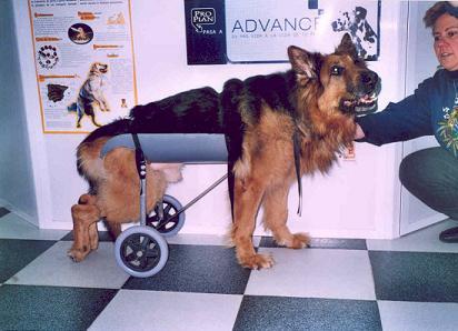 ruedas para mascotas