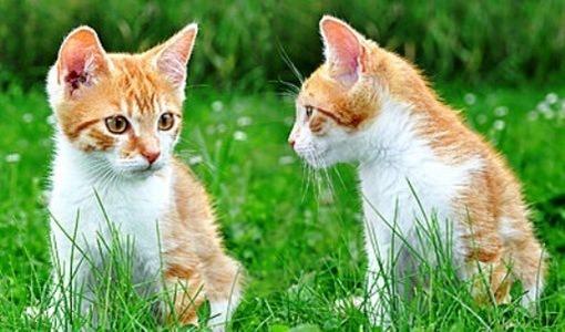 gatos jovenes