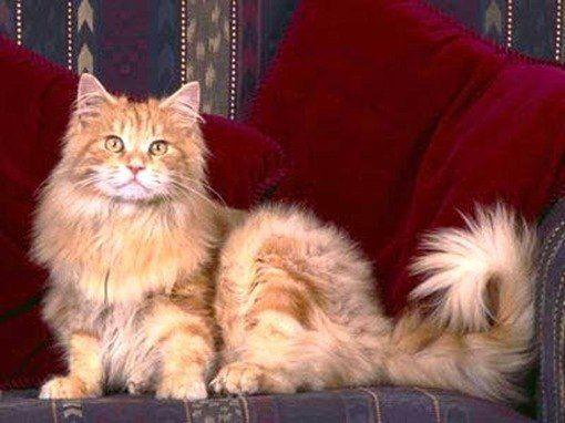 osteartrosis gatos