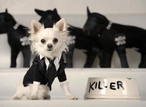 vestimenta canina