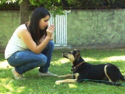 conducta canina