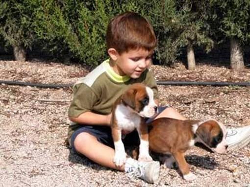 jerarquia perro