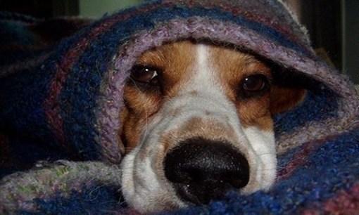 mascotas-y-frío