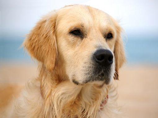 perros y enfermedades