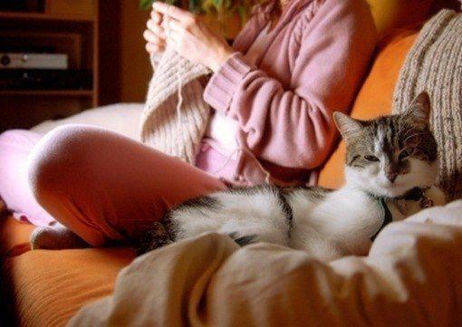 gato hogar
