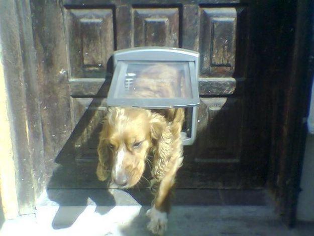 Ense ar a usar las puertas a las mascotas animalesmascotas for Puerta para perros