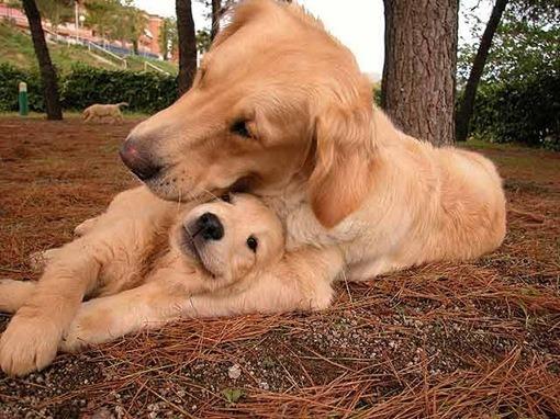 Antioxidantes mascotas