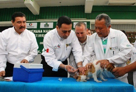 Vacunar mascotas
