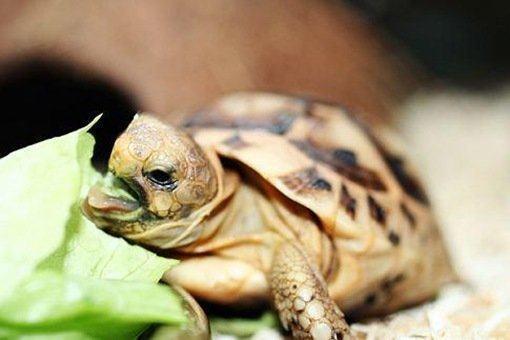 alimentacion de la tortuga