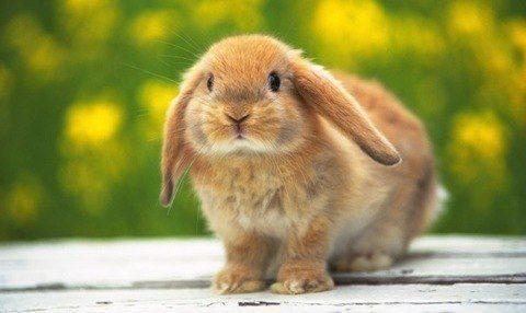 cuidar nuestro conejo