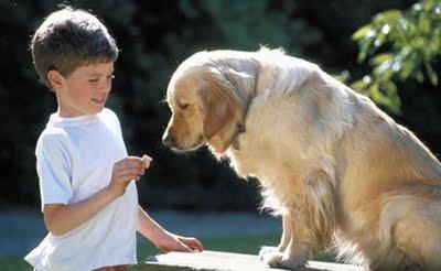 Aplicar psicología canina