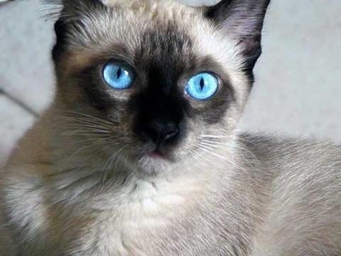 Ansiedad por separacion felinos