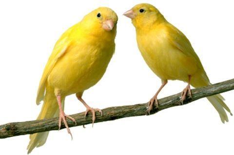 Como hacer feliz a un ave
