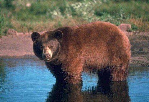 Cuáles son los animales silvestres? ¿Qué los diferencian de otras