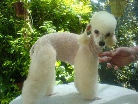 caida del pelo en perros