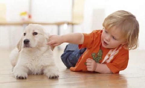 convivir feliz con mascotas