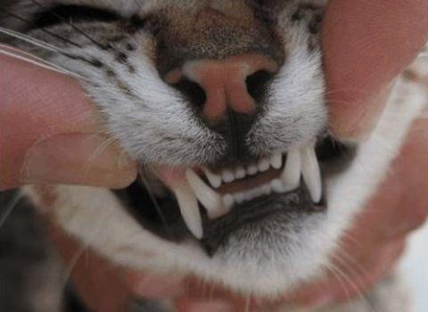 higiene en gatos