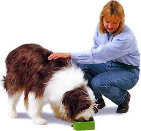 perro adulto cuidados