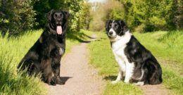 10 trucos para el adiestramiento de perros