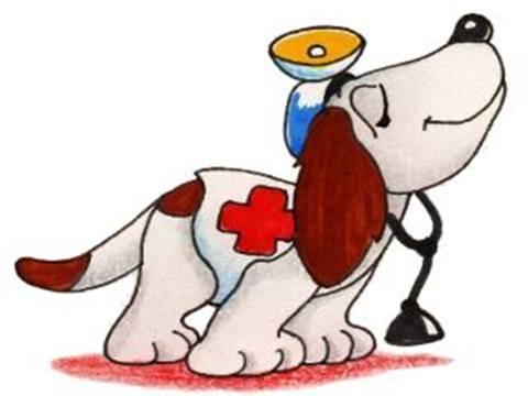 elegir el veterinario de nuestra mascota