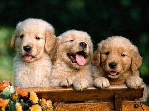 Cuidados especiales para cachorros