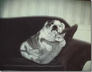 Gatos y perros asustados