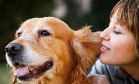 alimentar a un perro adulto