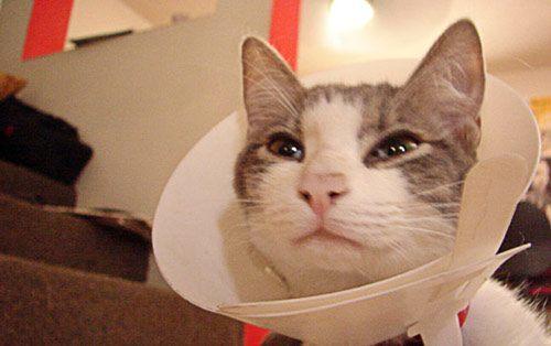 Cómo curar las heridas a nuestras mascotas